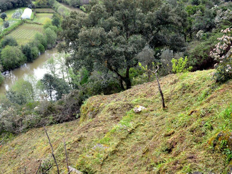 strimmed hillside and trees