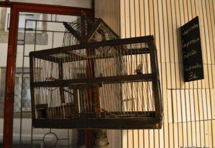 Birdcage, Arcada, Coimbra
