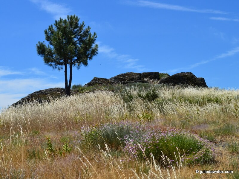 Grass, tree and rocks, Sortelha