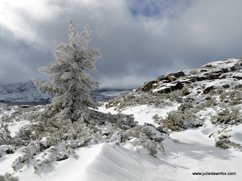 Snow-covered tree and rocks, Serra da Estrela, Portugal