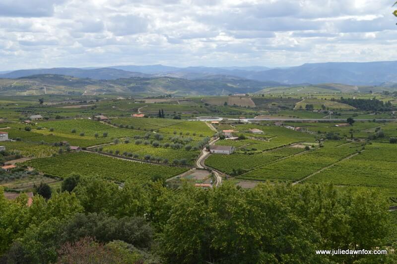 Vineyards, Favaios