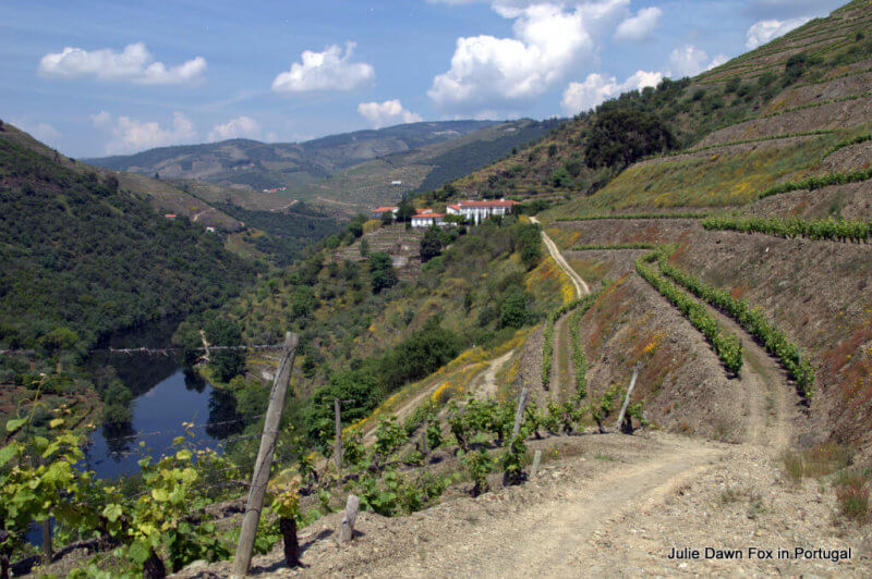 Vineyards and river, Quinta do Panascal on a Douro Valley one day tour, Portugal