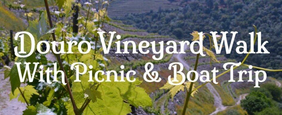 Douro Walking tour. Vineyard walk, picnic and boat trip