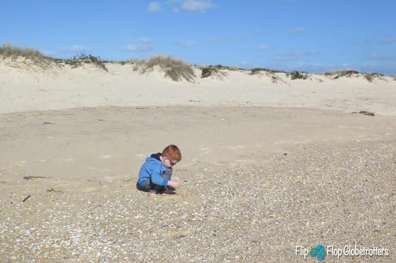 Young boy collecting shells at Culatra beach, Algarve
