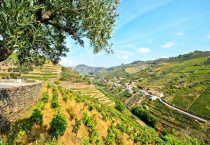 Landscape around Pinhão, Douro Valley Portugal