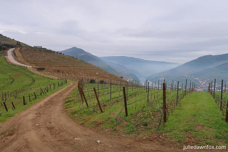 Vineyards, Quinta dos Murças, Douro wine region